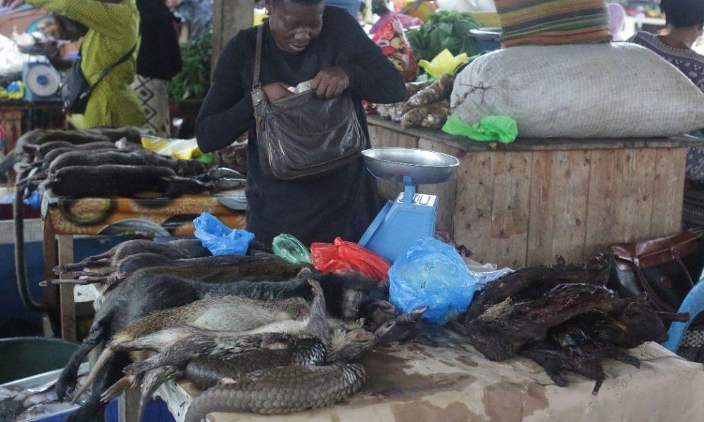 OMS: venta de mamíferos salvajes en mercados es un riesgo sanitario