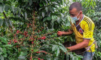 Exportaciones Café