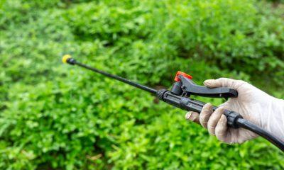 Cultivos ilícitos Colombia