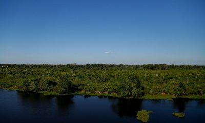 deforestacion amazonia agosto