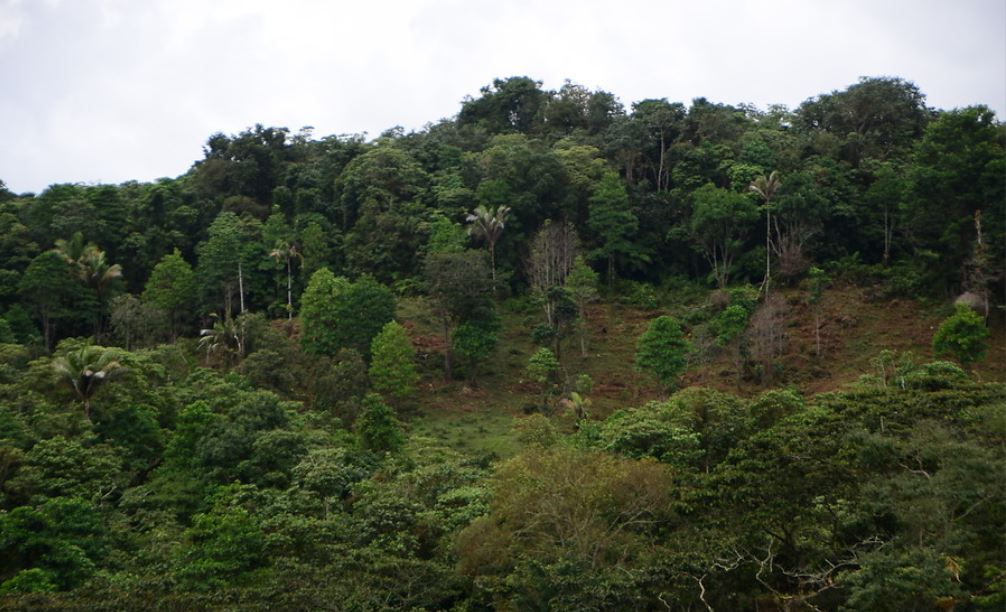 Gobierno estrategias mitigar deforestacion