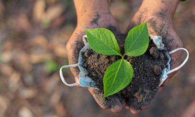 Día Mundial ambiente