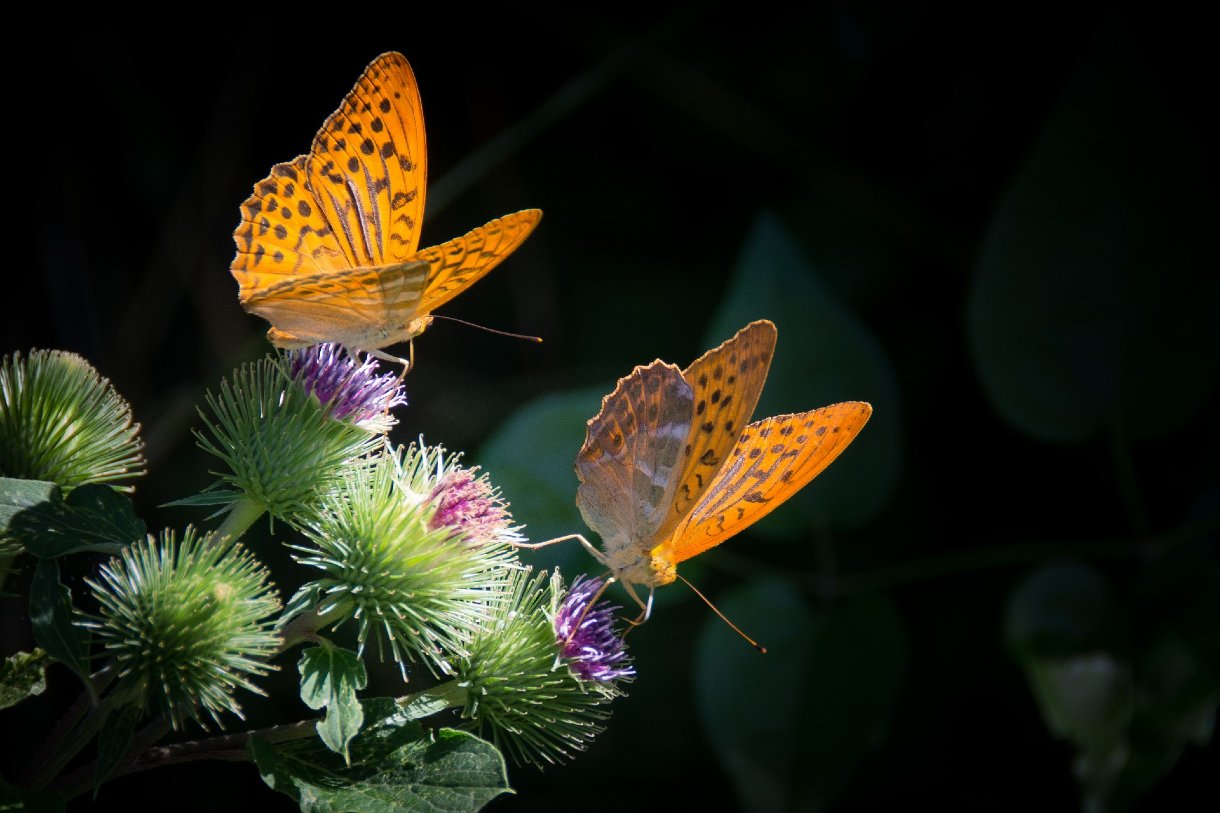 Colombia mariposas Colombia