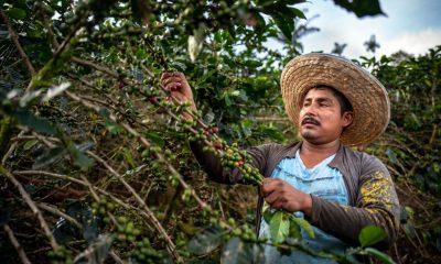 produccion cafe colombia julio