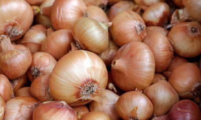 cosecha-cebolla-botada-guaca