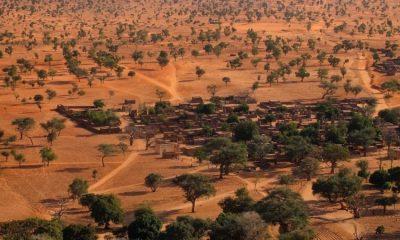 Árboles en el Sahara