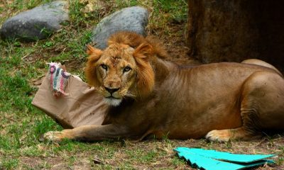 leon cali