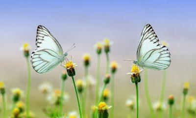 Mariposas en Colombia