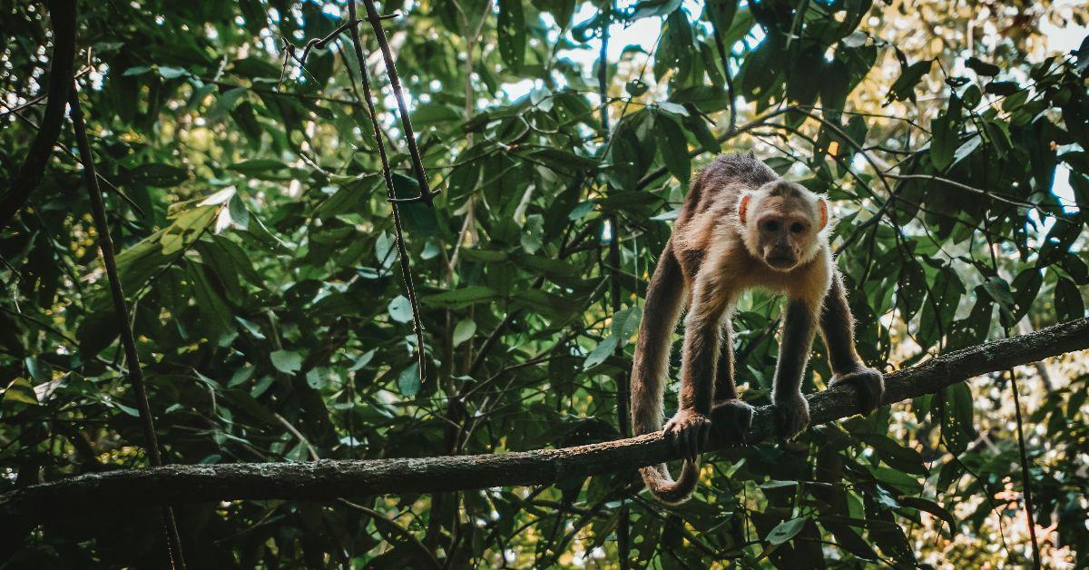 mono naturaleza